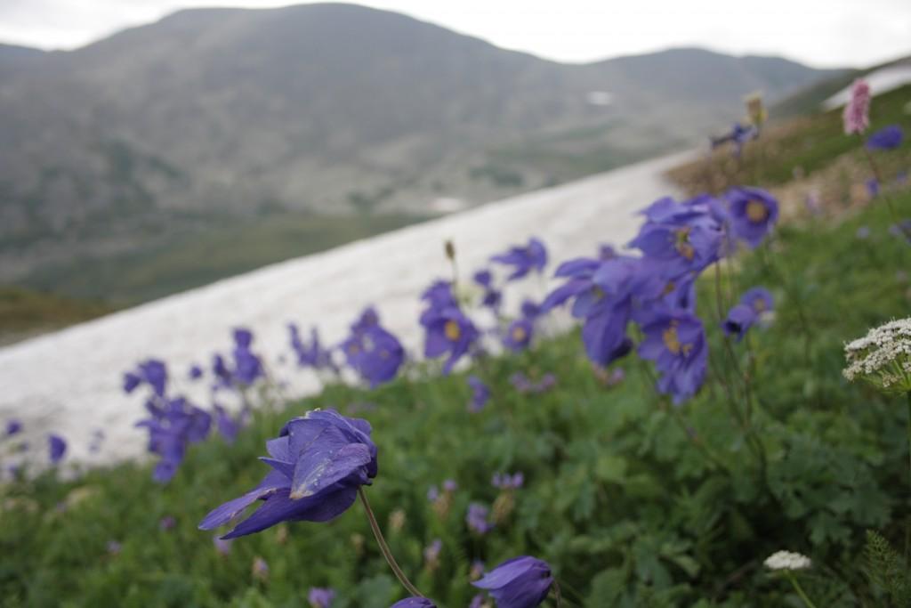 Альпийские луга на перевале Караташский